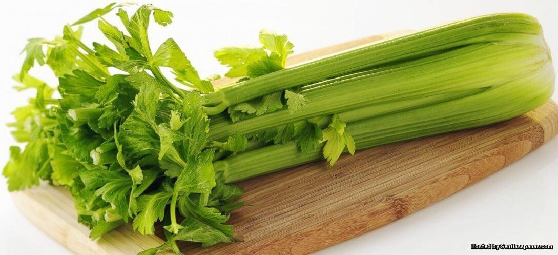 Khasiat Dan Manfaat Herba Saderi Untuk Kesihatan