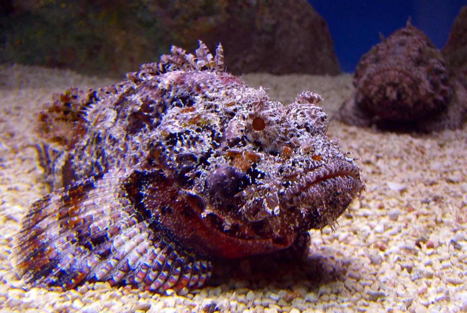 Blok888: Top 10 Most Venomous Animals in the world