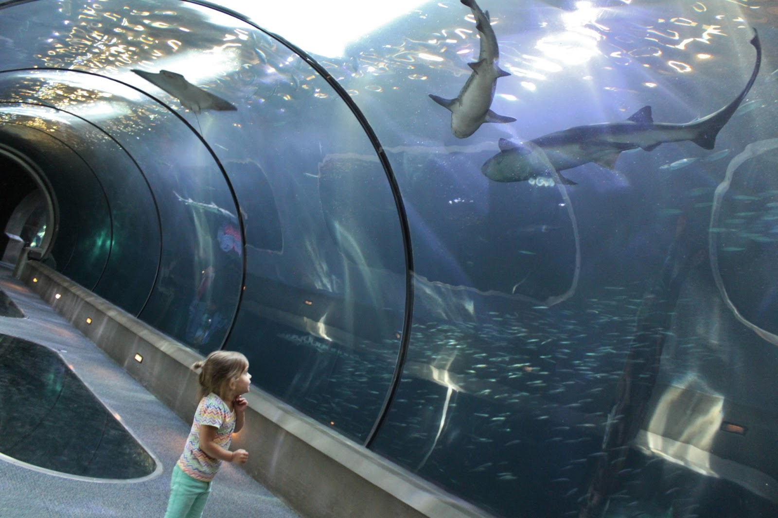 graphic regarding Newport Aquarium Coupons Printable referred to as Discount codes for oregon coastline aquarium - Tesco specials weekend breaks