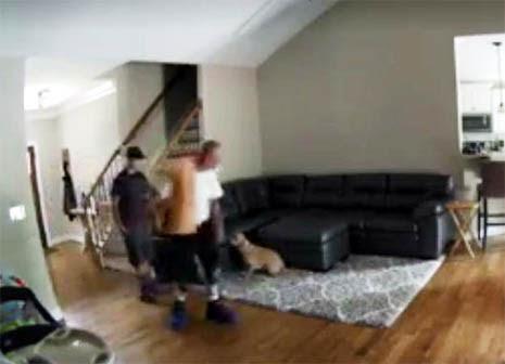 Pf Plumbing Dog Video