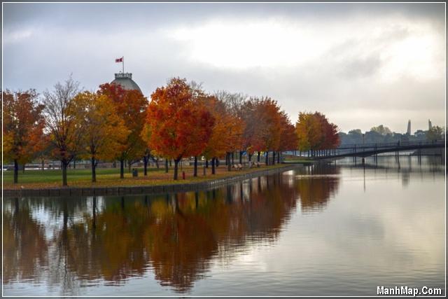 hàng cây mùa thu in trong bóng nước
