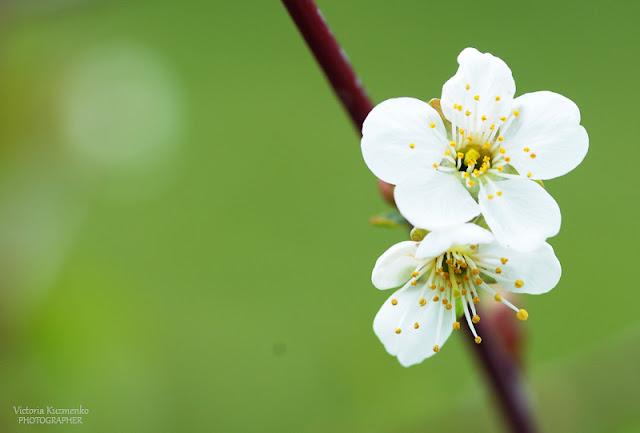 Весна все же пришла!
