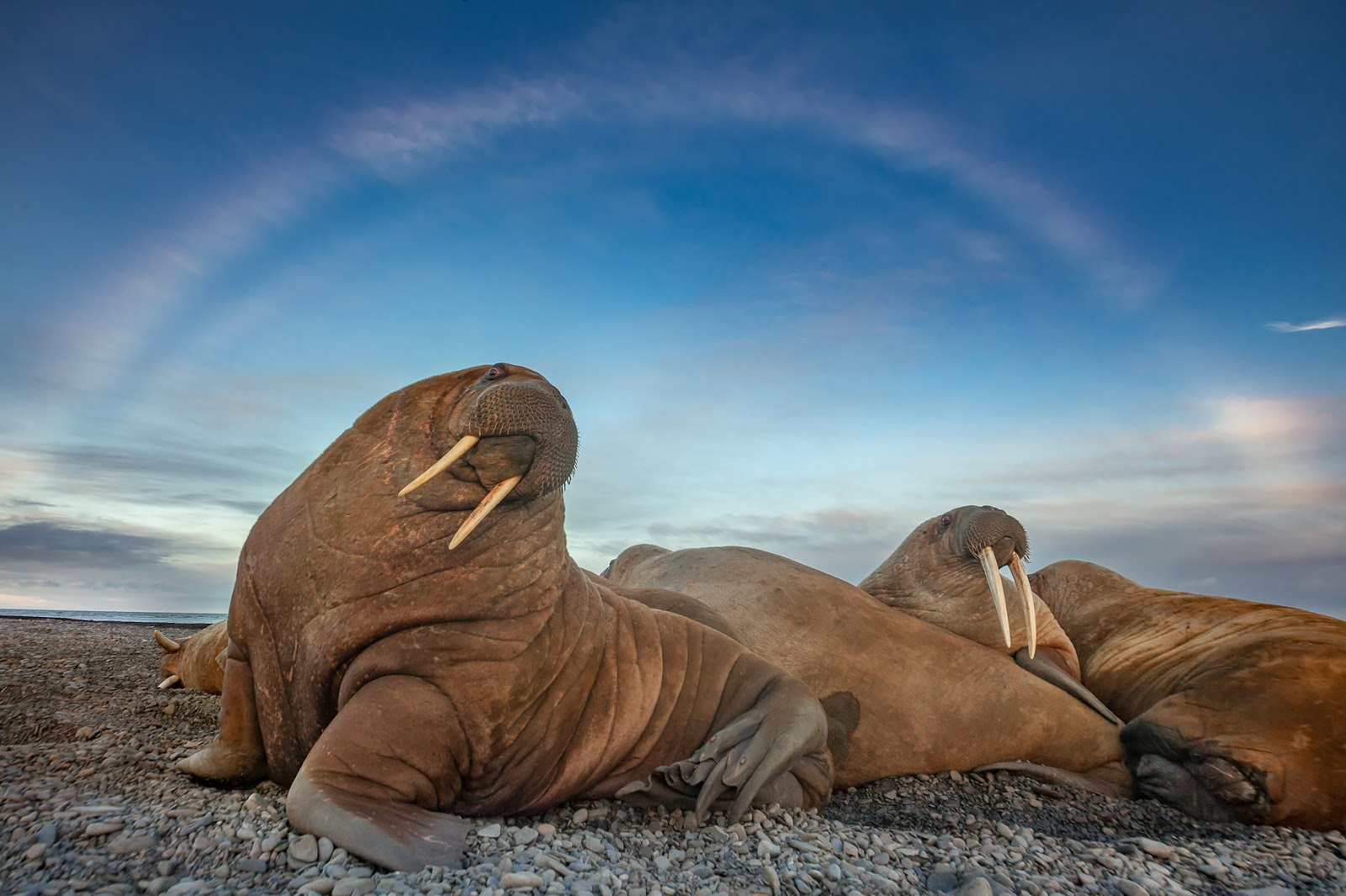 Лучшие фотографии читателей National Geographic Россия-2017