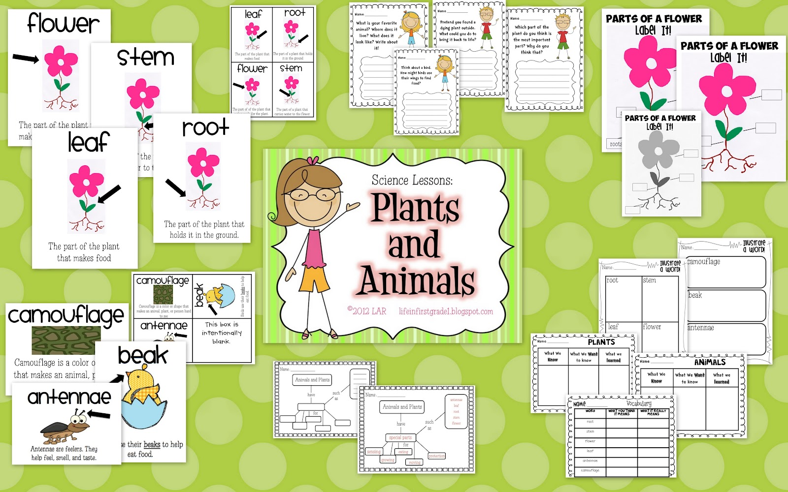 Life In First Grade New Science Unit Plants And Animals