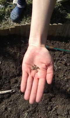 A marzo nell'orto si semina: in campo.