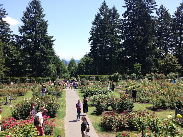 Portland Oregon Rose Garden