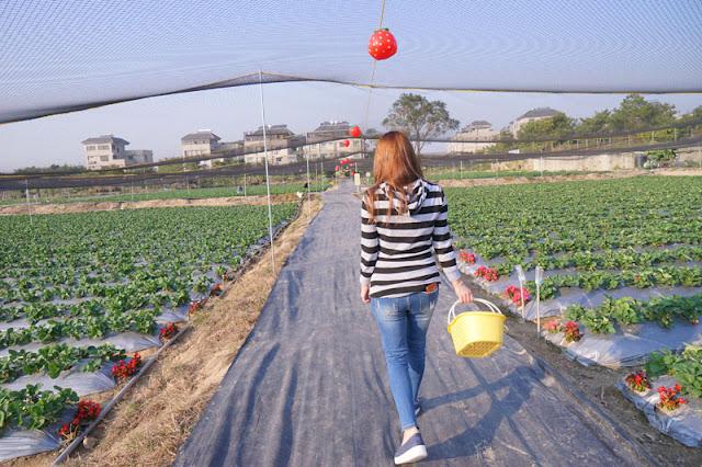DSC00860 - 台中觀光果園│採草莓不用去大湖,台中草莓世界就在潭子慈濟醫院對面開採囉