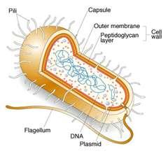 Live Your Life: Blog 8 : Bacteria vs. Virus vs. Protist