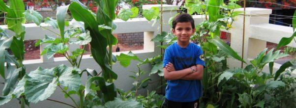 Informasi yang harus Anda ketahui tentang berkebun sayuran organik