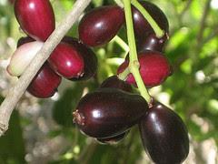 As 10 frutas que cura