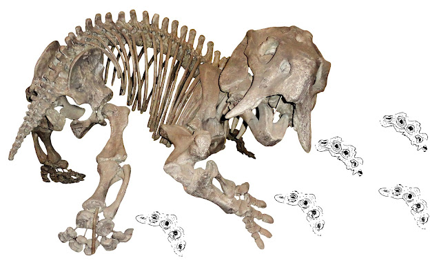 New research solves the 60-year-old paleontological mystery of a 'phantom' dicynodont