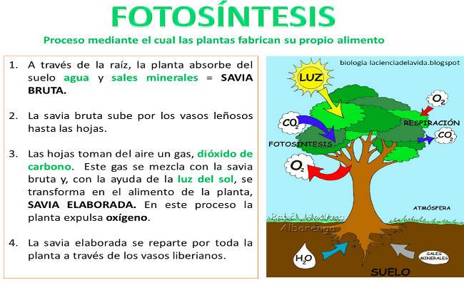 Fotosintesis para Niños