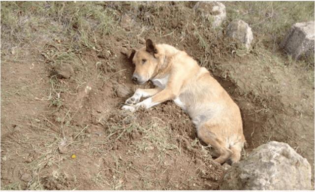 Παλλήνη: Έθαψαν σκύλο ζωντανό -Αναζητείται ο δράστης (εικόνα)