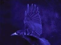 "Resenha: ""Enshadowed"" - O Pesadelo das Sombras - Série Nevermore - Livro 02 - Kelly Creagh"