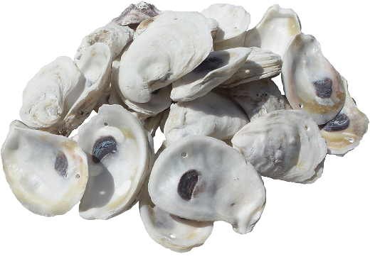 Shop Drilled Oyster Shells