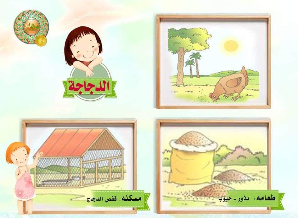 بطاقات تعليمية...حيوانات ومساكنها وطعامها... pdf