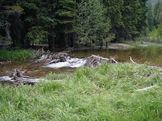Beaver dam on the Colorado River, Rocky Mountains NP
