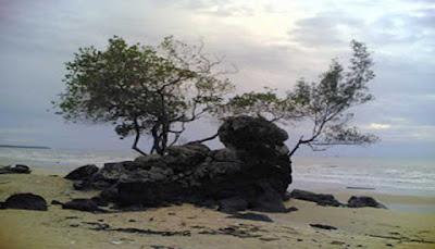 Pohon Batu Berdaun