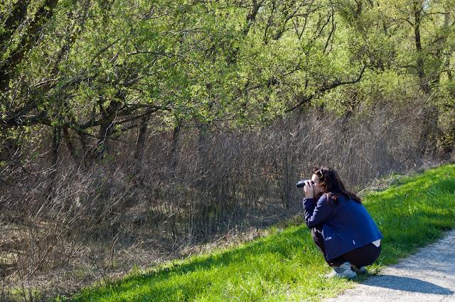 Traseu a trei coridoare majore de migratie a pasarilor care clocesc pe teritoriul Eurasiei.