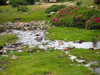 Aigua que rellisca prop de l'estany - Refugi de Cortalets - Canigó per Teresa Grau i Ros