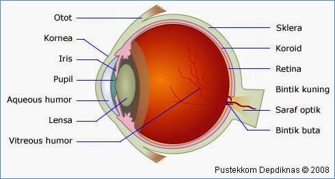 Pengertian dan Konsep dari Sistem Visual Mata pada Manusia_