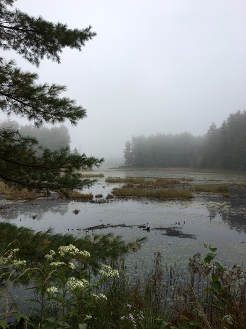 mist covered bog