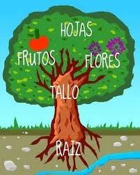 Educar es amar el rbol y sus partes for Cuales son las partes de un arbol