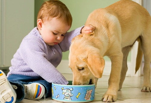 cachorro e crianca