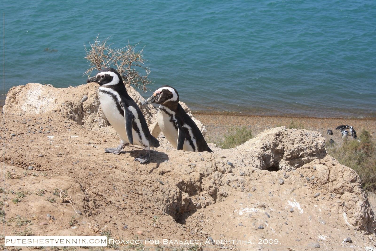 Пингвины на скале у океана