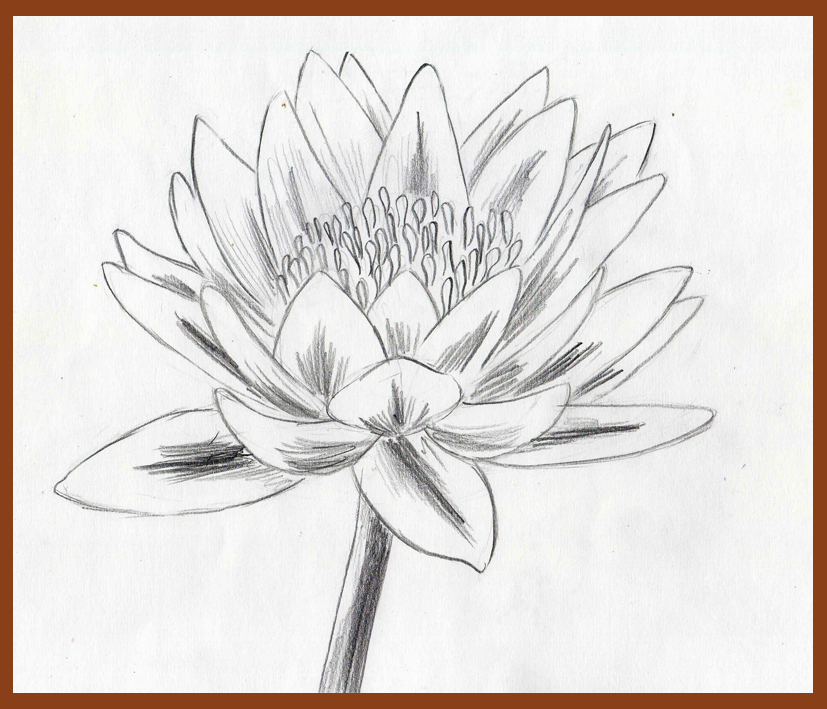 Weekly : Doodles and tuts: How to draw a Water Lily - Method 2