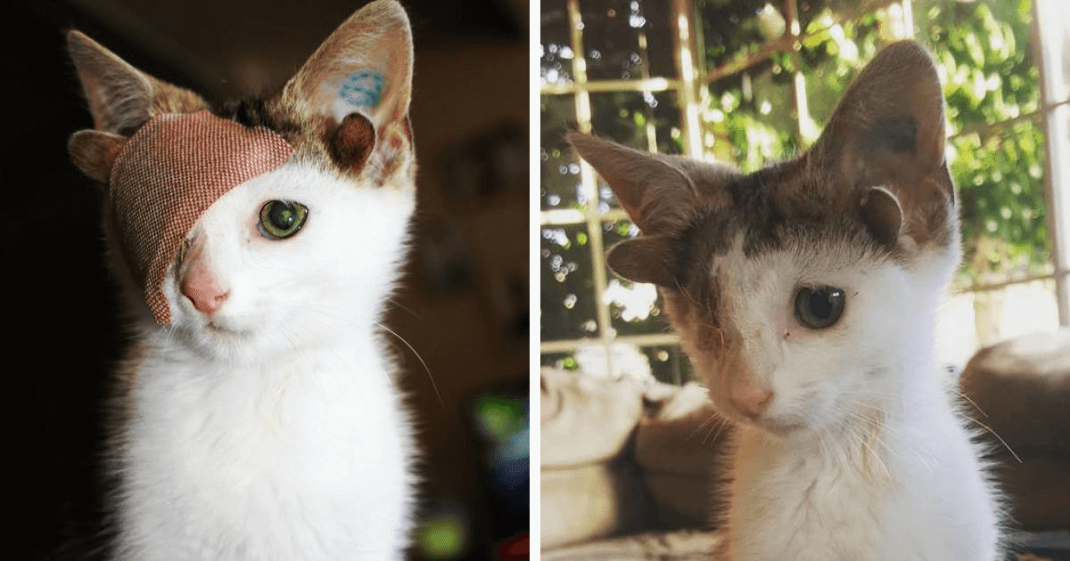 Rescue Kitty With Four Ears And One Eye Finally Found A Forever Home