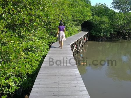 Bali mangrove forests damaged by pollution