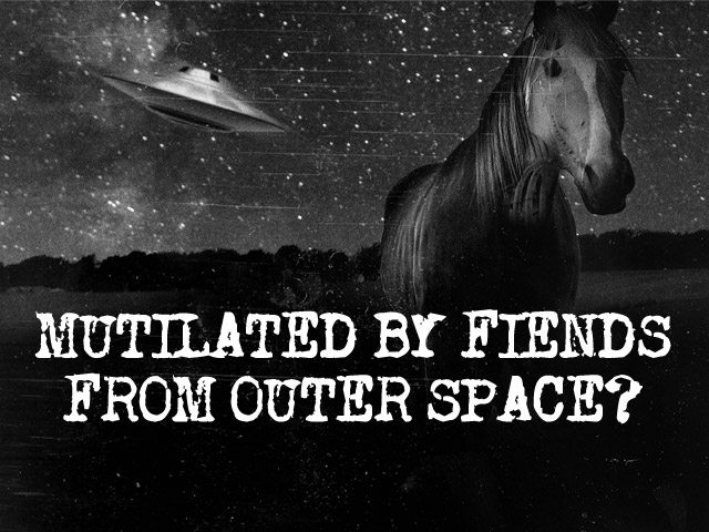 Was Snippy The Horse Murdered By Extraterrestrials?