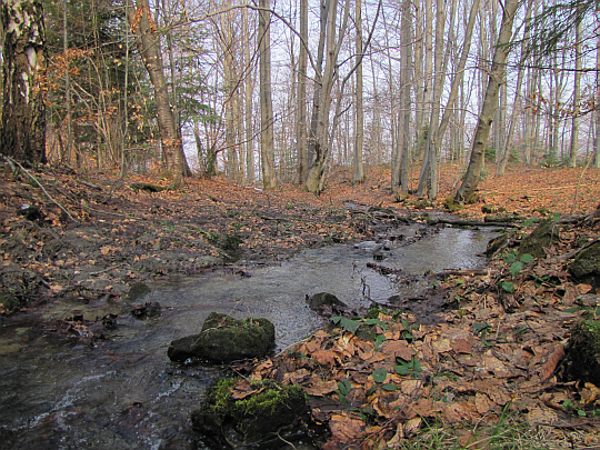 Jeden ze źródliskowych potoków Bartnianki.