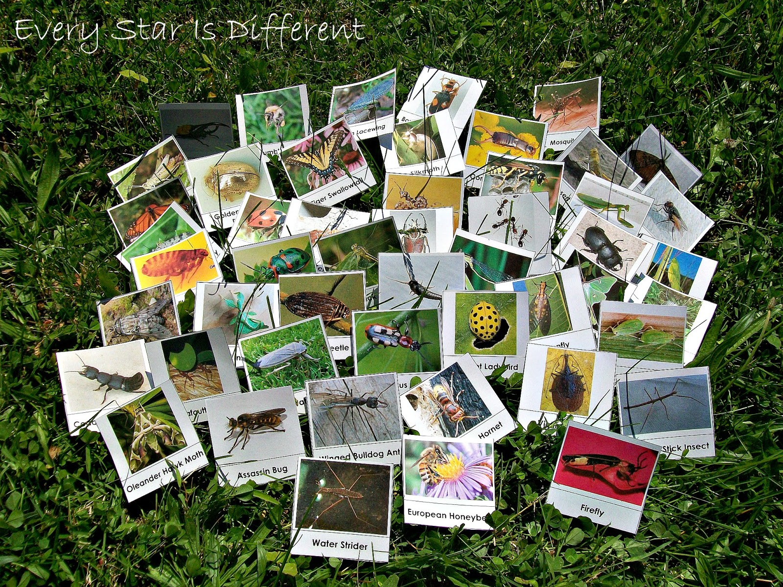 50 Insect Cards for Kids (free printable)