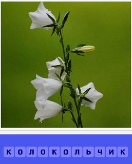 на поле вырос небольшой цветок колокольчик