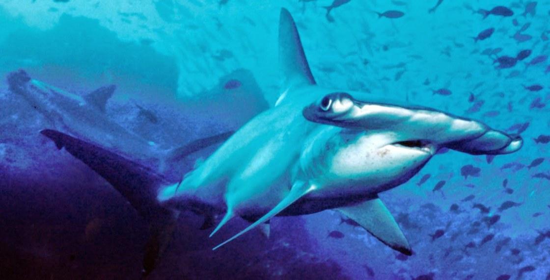 Peces concepto caracter sticas y clasificaci n biolog a for Como se cultivan los peces