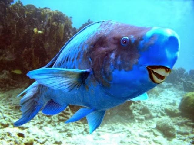 Los animales más sorprendentes del mundo