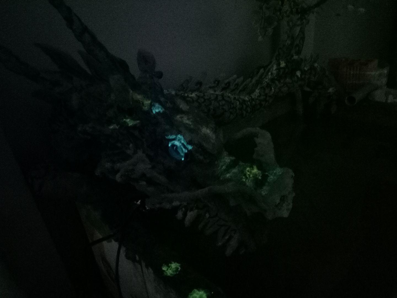 Mắt rồng phát sáng trong đêm