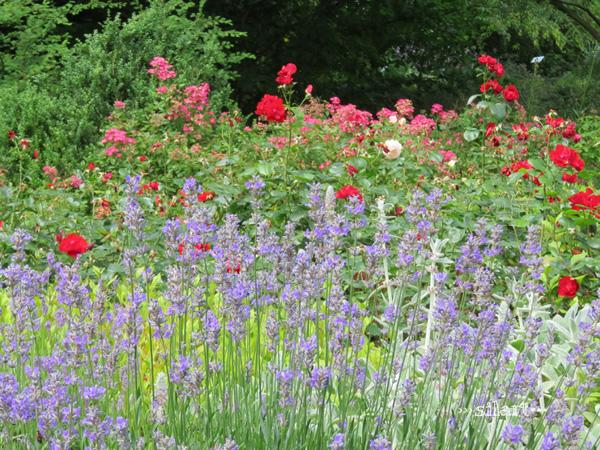 Farbenpracht, lila, rosa und rote Blumen