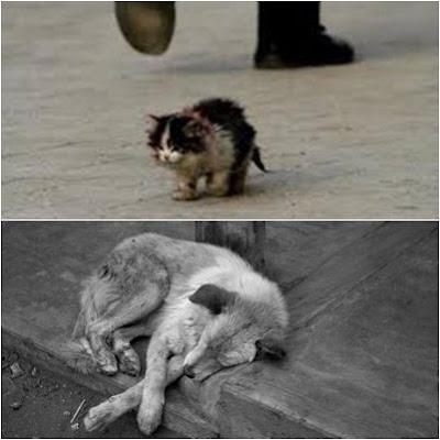 abandono-gato-perro-tristeza