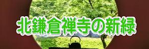 北鎌倉禅寺の新緑