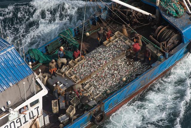 Greenpeace: Εισαγόμενα το 50% των αλιευμάτων που καταναλώνουμε