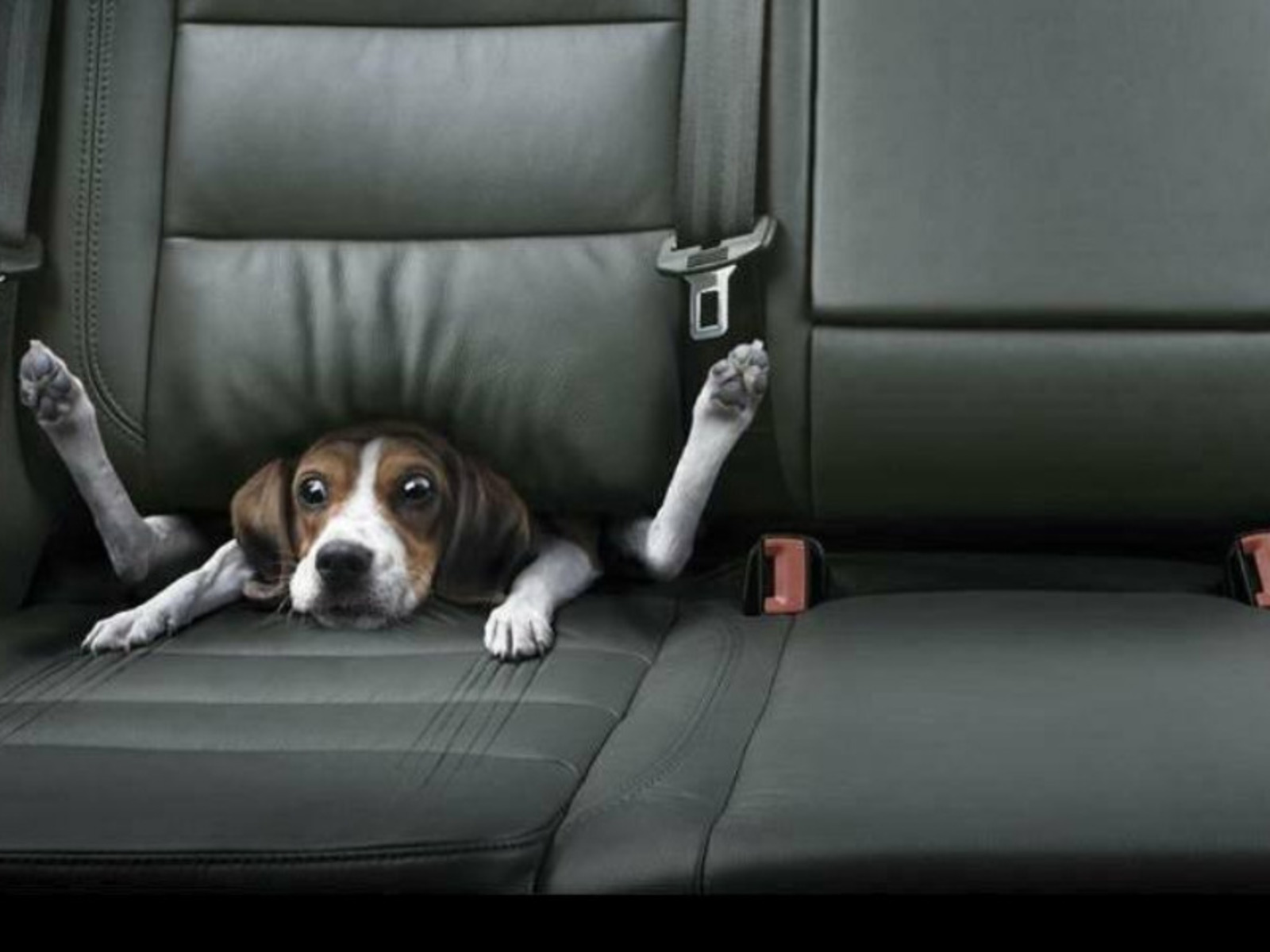 Funny wallpapers hd wallpapers funny dog wallpaper for Fun wallpaper for home