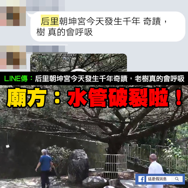 后里 朝坤宮 LINE 影片 千年 老樹 呼吸