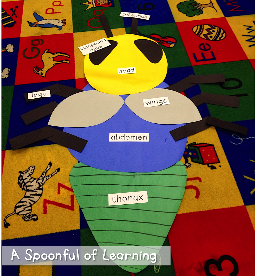 A Spoonful Of Learning Insects Part One