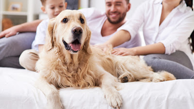 ask-about-renting-with-pets
