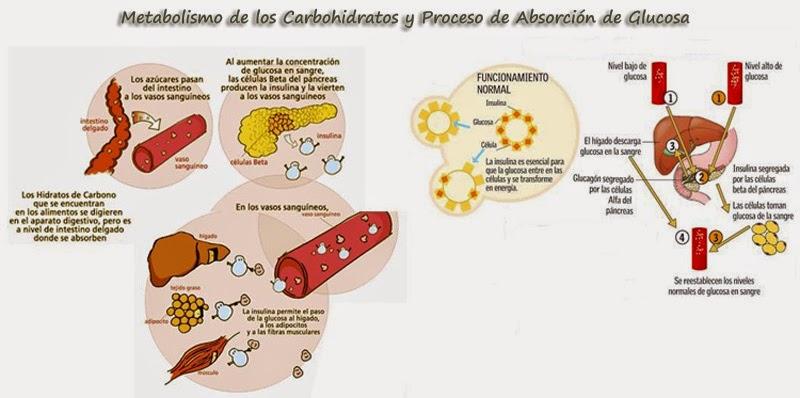Metabolismo de un vistazo
