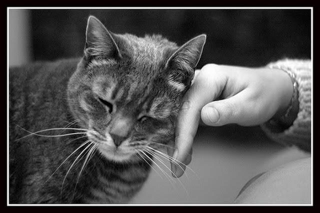 pisicile ne pot vindeca