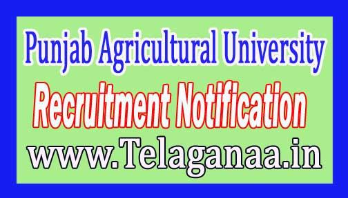 Punjab Agricultural University PAU Recruitment Notification 2017 Last Date 08 December 2016